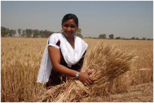 New staff member Shabnam holds up a sheaf of wheat