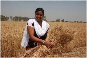 New staff member Shabnam holds up a sheaf of wheat