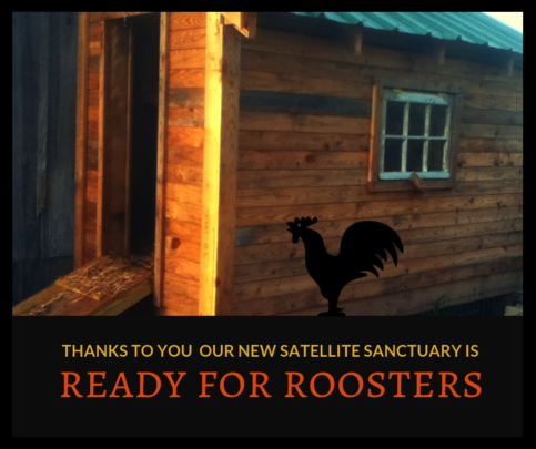 New Rooster Coop