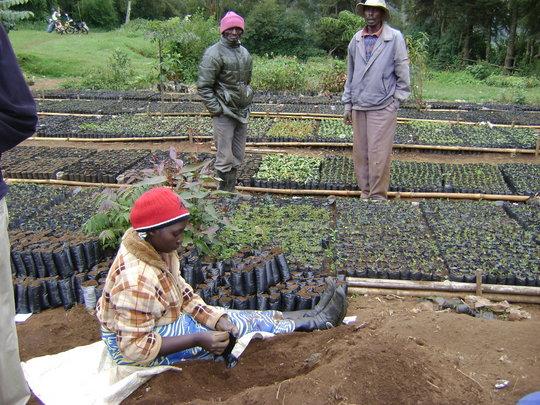 Rehabilitation of 'Kikuyu Escarpment' Kenya
