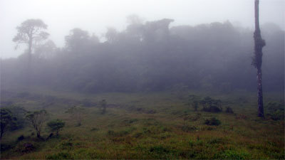 Right hand forest on David Alvarez