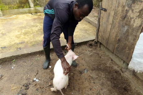 RAISE A YOUNG PIG FARMER IN SOUTHERN NIGERIA
