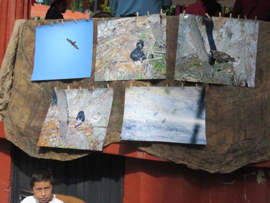 Golden eagle photos in the 7th Native Corn Fair.