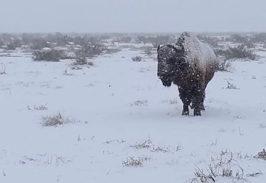 Winter in the Chihuahuan desert is harsh.