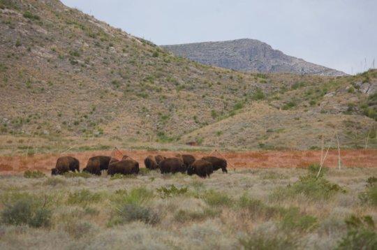 The herd enjoying its new home!