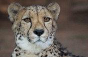 Help Cheetah Experience turn waste into compost!