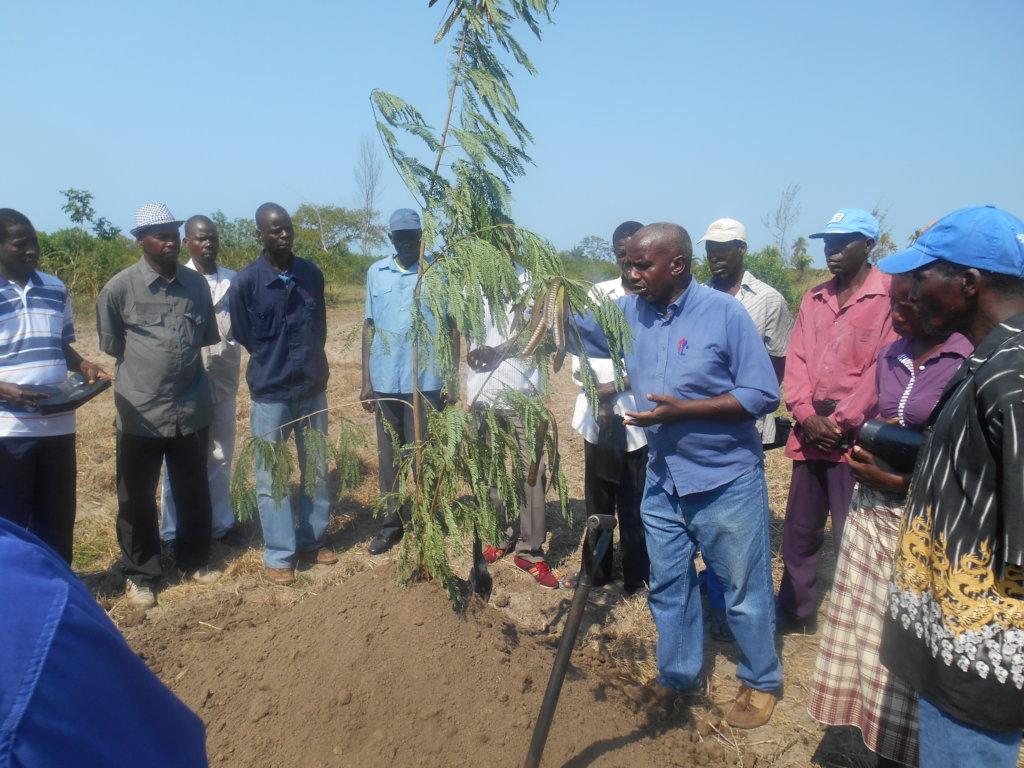 Mangrove Planting (Community / Students) of Barada