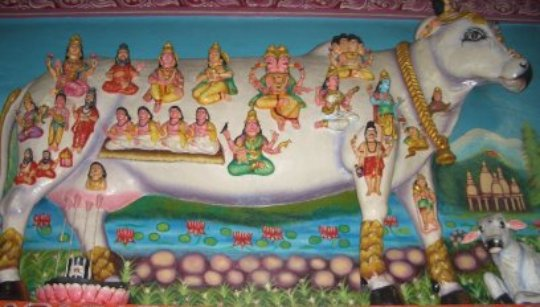 Hindus believe that all Gods are live inside a cow