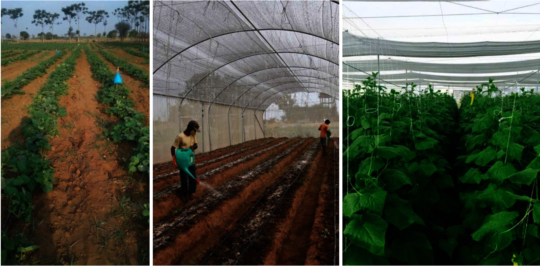 From open-land farming to Greenhouse farming