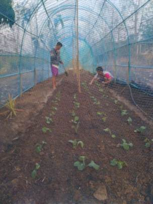 New crop started in the blue net
