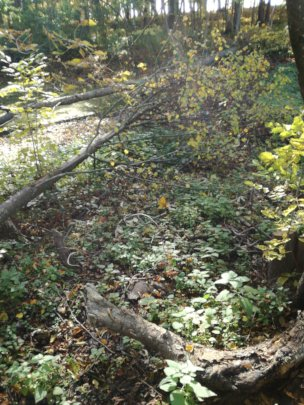 PARK INTERIOR WITH FALLEN TREES