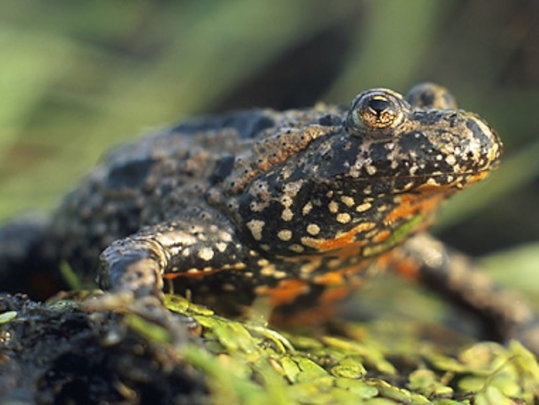 Safeguarding Frogs and Birds in Masuria, Poland