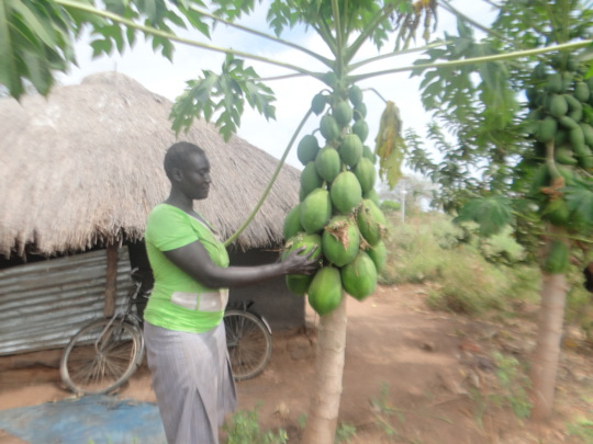 A refugee with her productive pawpaw (papaya) tree