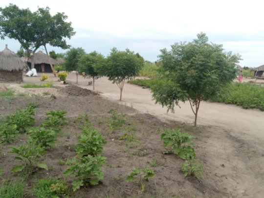'Our' trees lead up to a family homestead