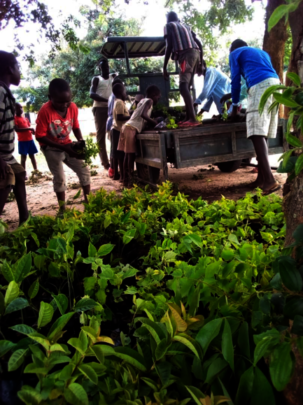 Children offload seedlings for their homes