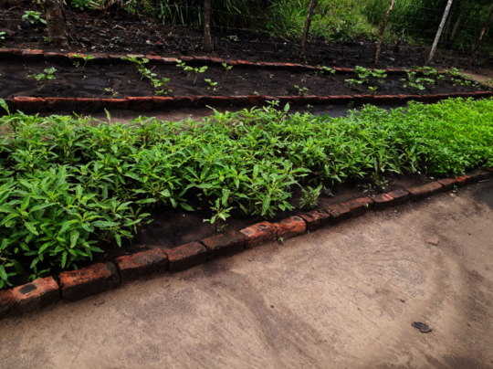 A bed of indigenous vegetables