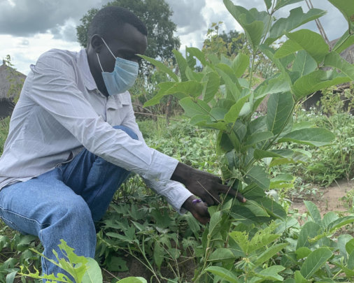 Bidal demonstrates how to assist a tree to regrow