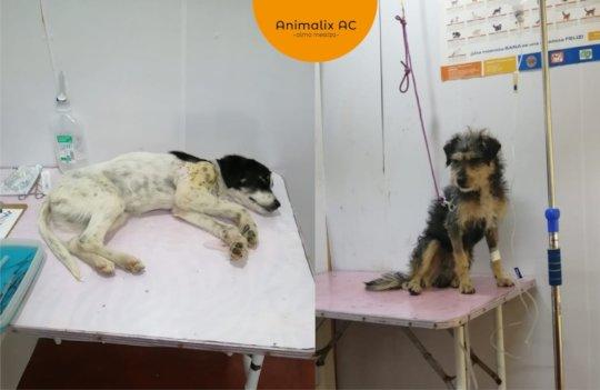 Oreo and Roko at the vet