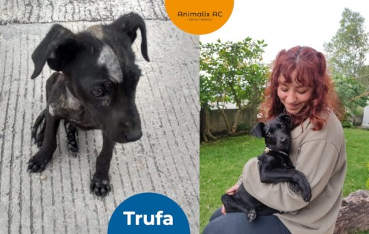 Truffle: before and after