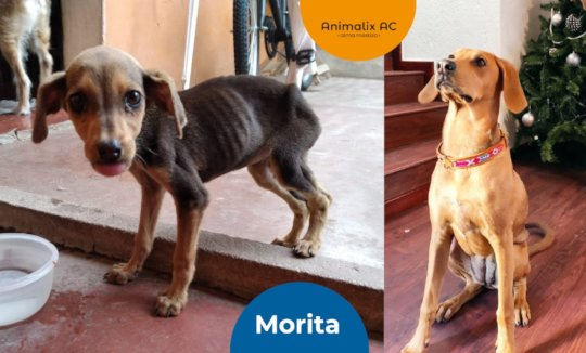 Morita: before and after