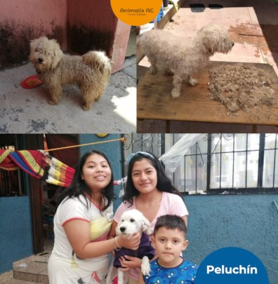 Peluchin: before and after