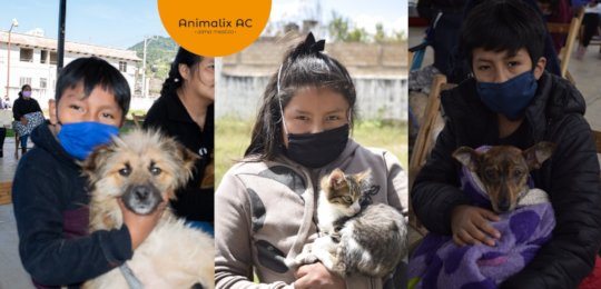 Free spay and neuter campaing