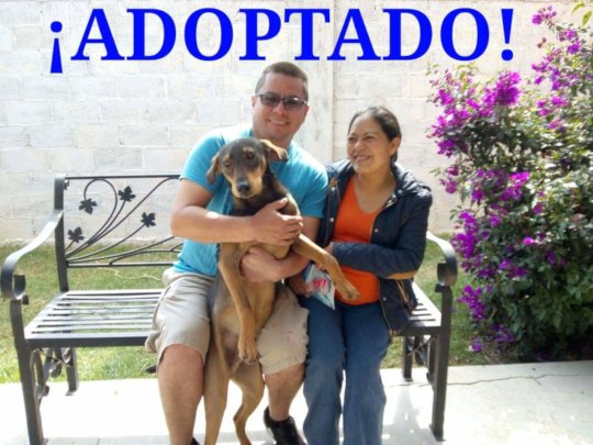 Churro with his new family
