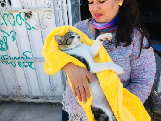 Spay and neuter campaing