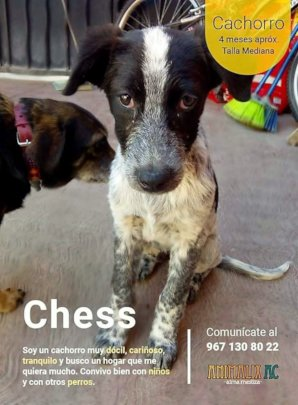 Chees ready to be adopted