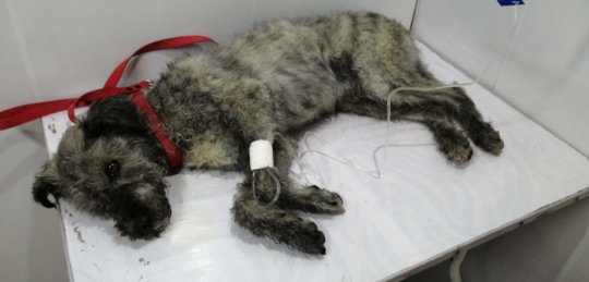 Dog with distemper