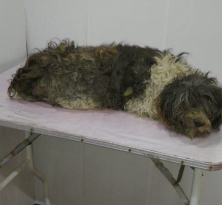 Dog with brain tumor