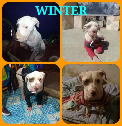 Winter recovering from his wounds