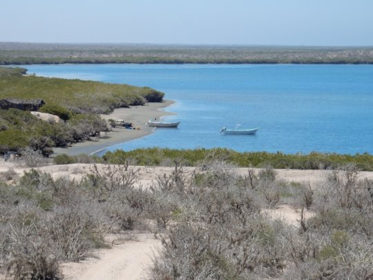 Mangrove, sarcocaule scrub and fishermen.