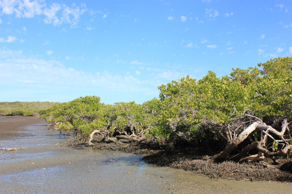 Create 50 guardians for Bahia Magdalena mangrove