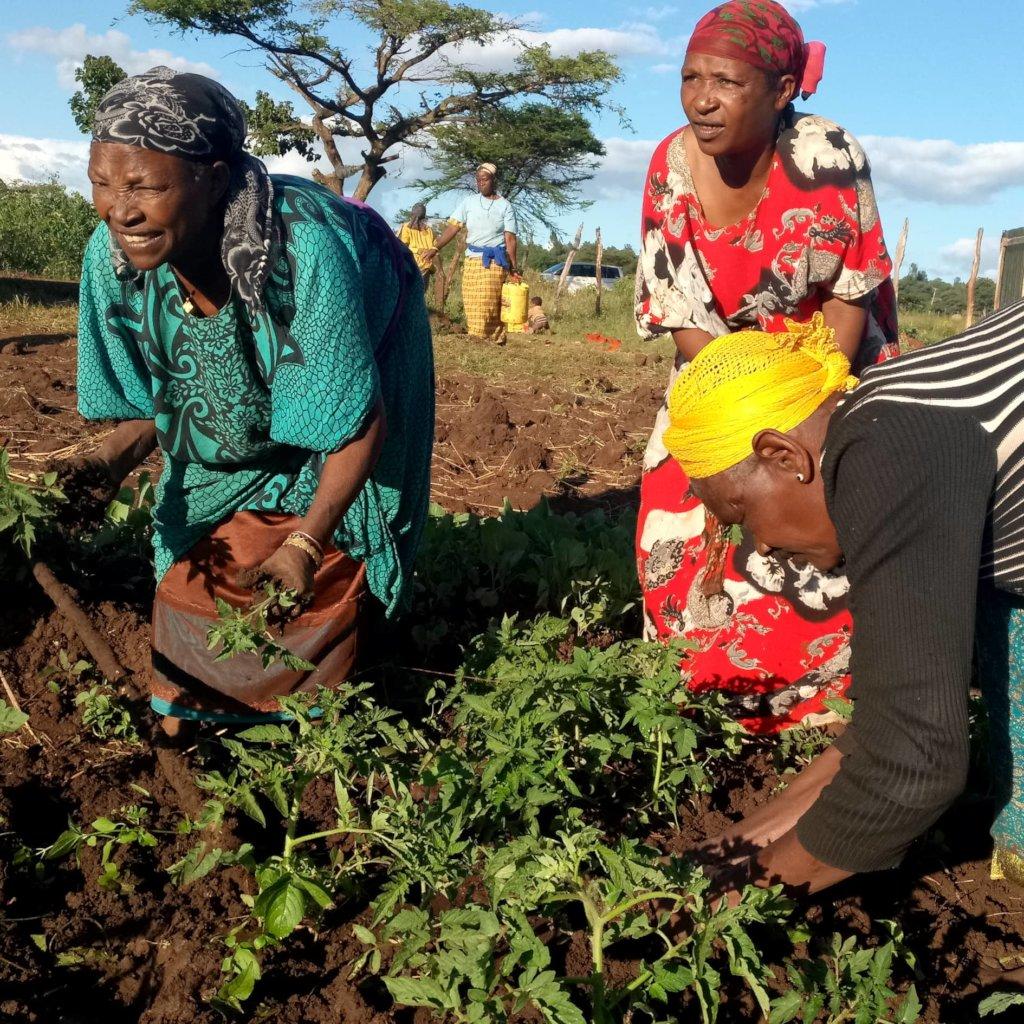 Transplanting seedlings at Burji