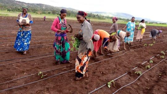 Laying drip lines, planting seedlings, Spring 2019
