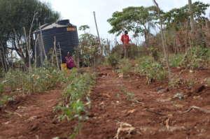 Garden Fed by Water Tank