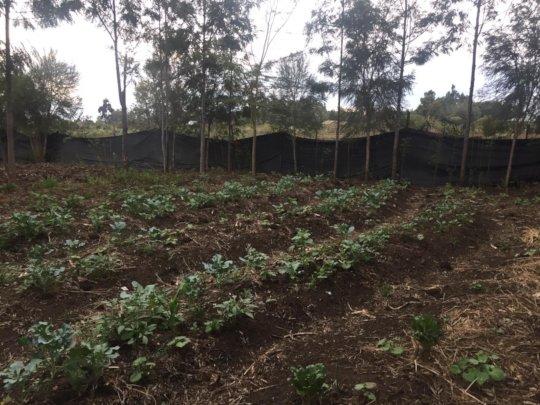 Agatha Amani crops
