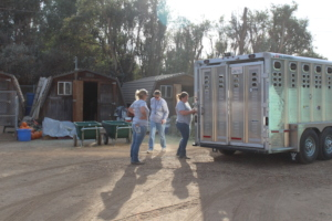 The horse stock trailer in use, Woolsey Fire