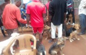 Save hundreds of dogs in  rural Cameroon.