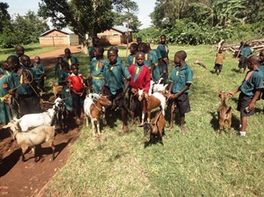Goats at the School