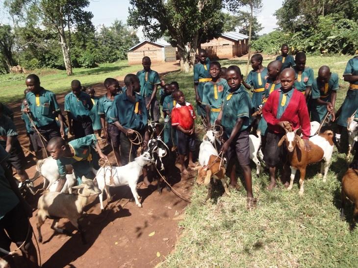 The goats arrive