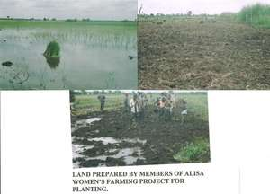 Land prepared for planting