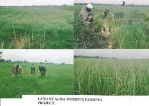 Rice transplanted by members