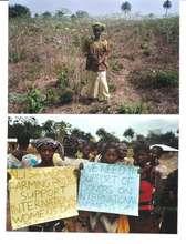 Cassava farm for Alisa Women's Farming Project