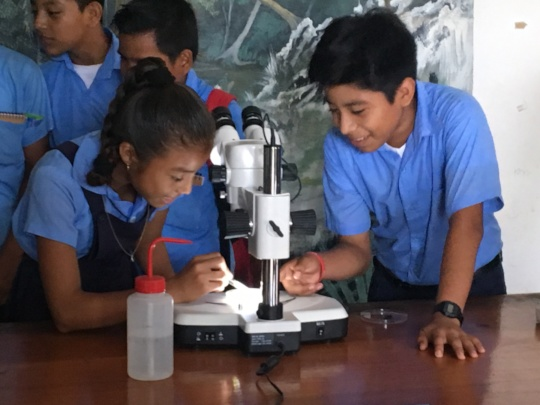 Students identifying macroinvertebrates