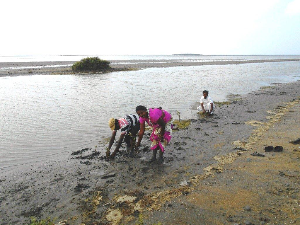 Help Mangroves Plantation-Wed-land promotion