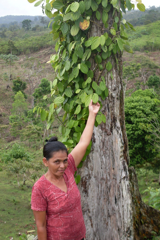 Restoring Forests and Nourishing Communities