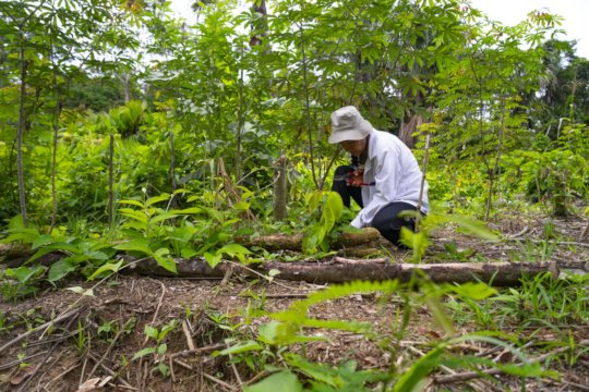 Agroforestry expert Silvia in the 'chacra'