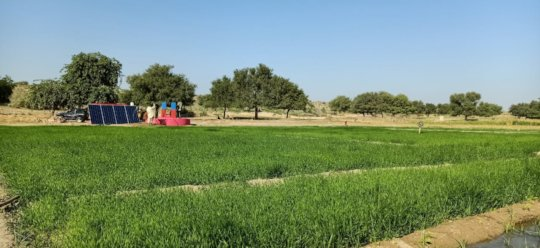 Lush Green Field in Thar